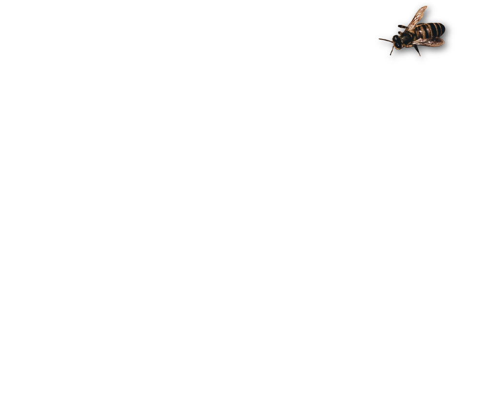 Ideas 2 Results